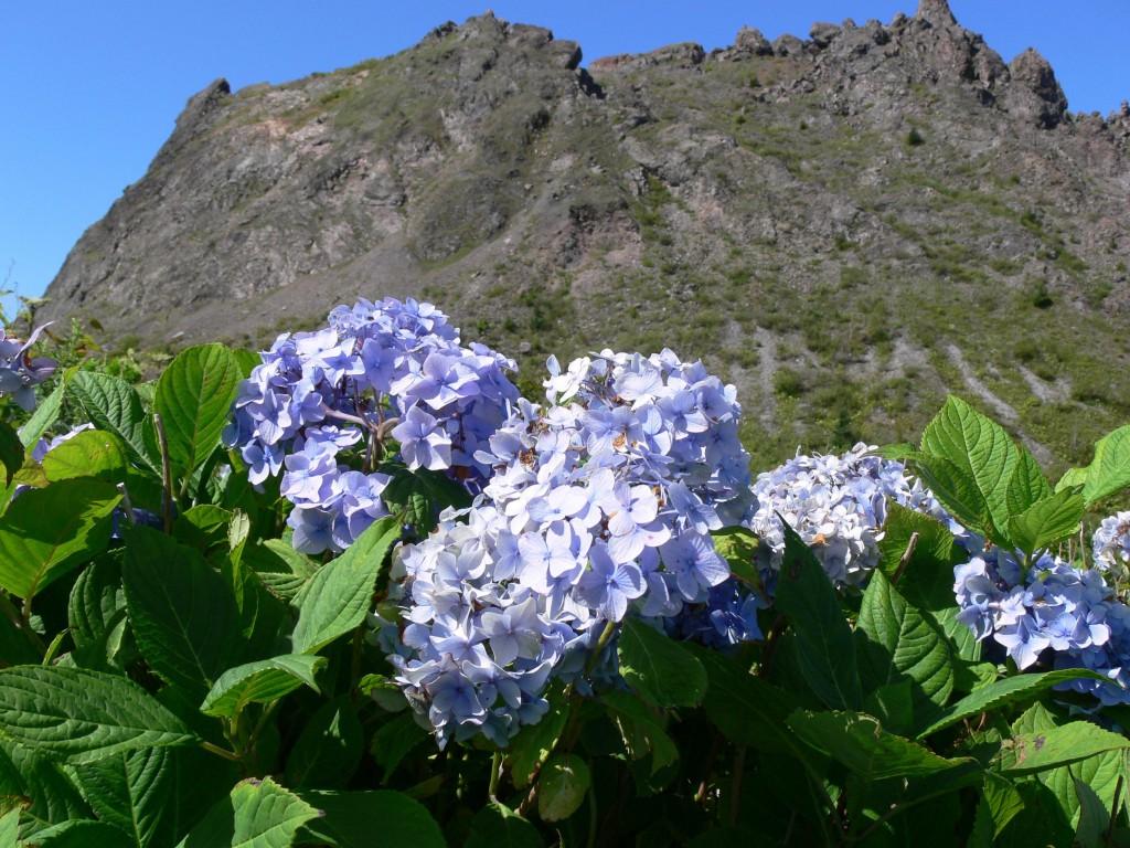 флора Хоккайдо