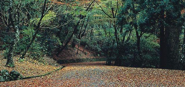 Нара древний лес