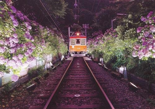 гортензия в Японии